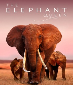 فيلم The Elephant Queen 2019 مترجم